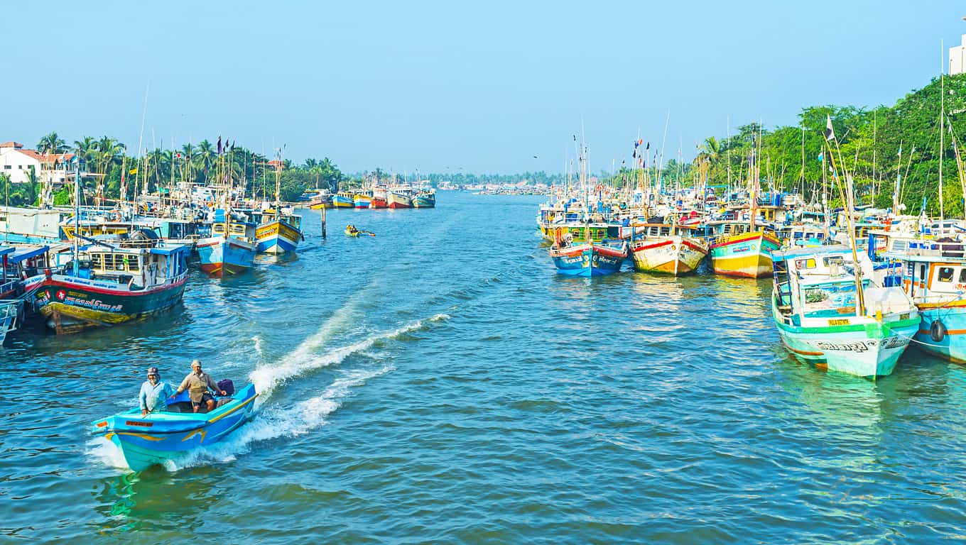 Fishing Boats - Negombo, Sri Lanka