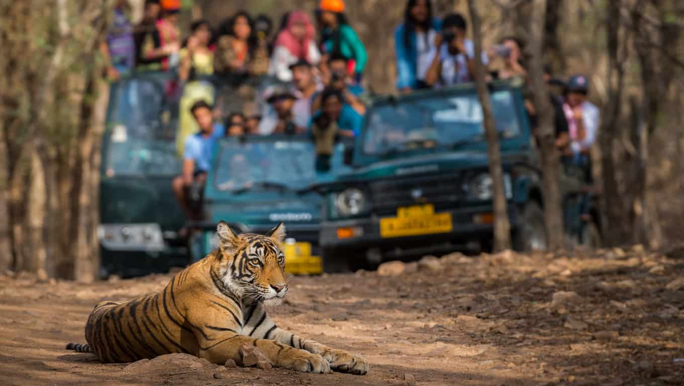Game Drive In Ranthambore National Park - Rajasthan, India
