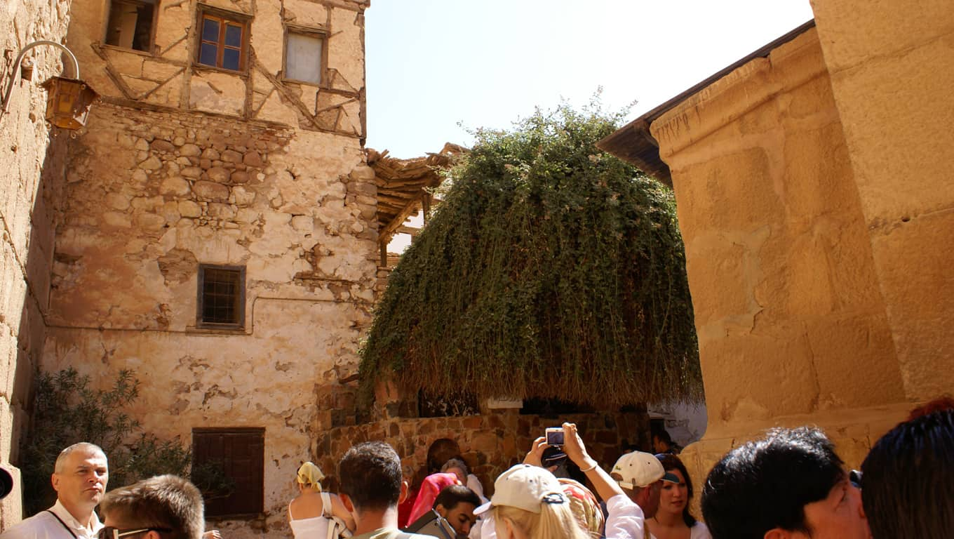 Burning Bush At St. Catherine Monastery - Sinai, Egypt