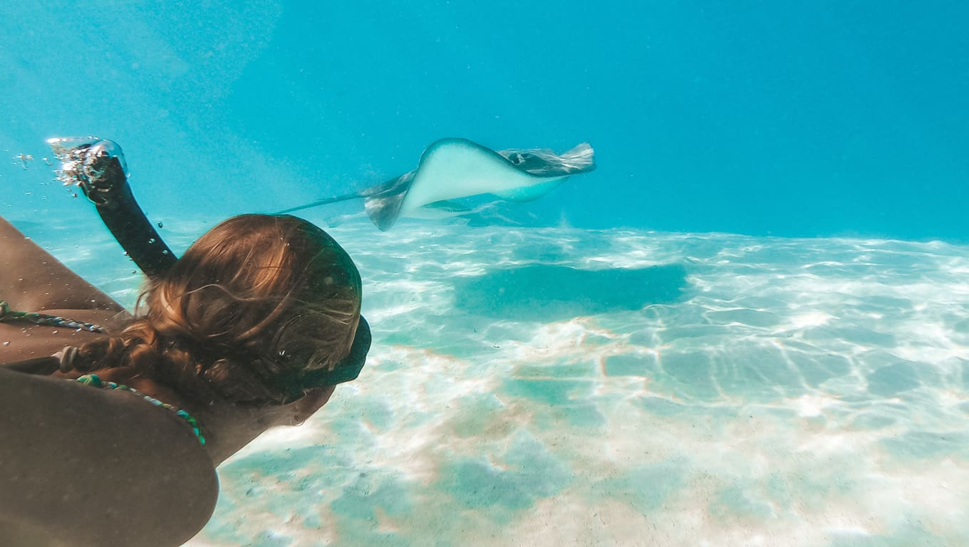 Snorkelling With A Sting Ray